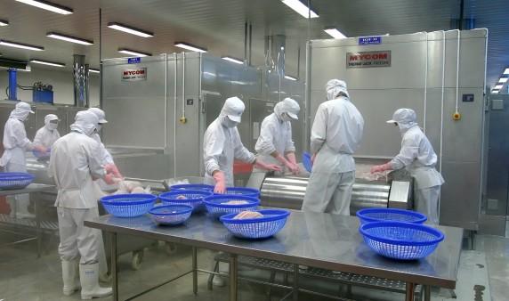 công nhân nhà máy chế biến đông lạnh